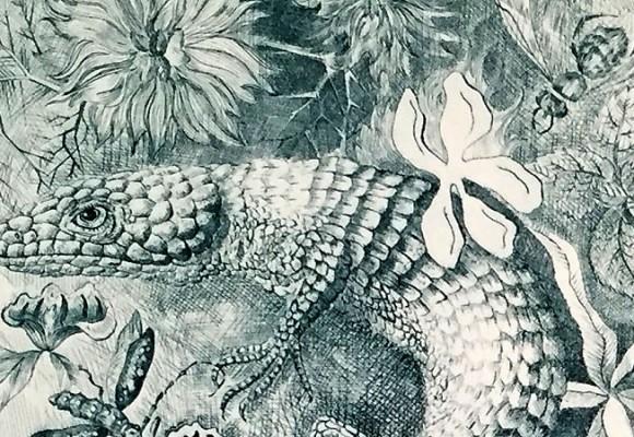 Petit Nature : le dessin naturaliste magnifié